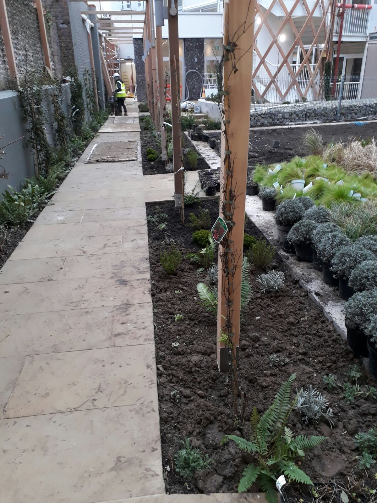 Exciting times at #Hortsley, Seaford! Our planting currently being set out by @AcreLandscapes, and the pond is fill… twitter.com/i/web/status/9…
